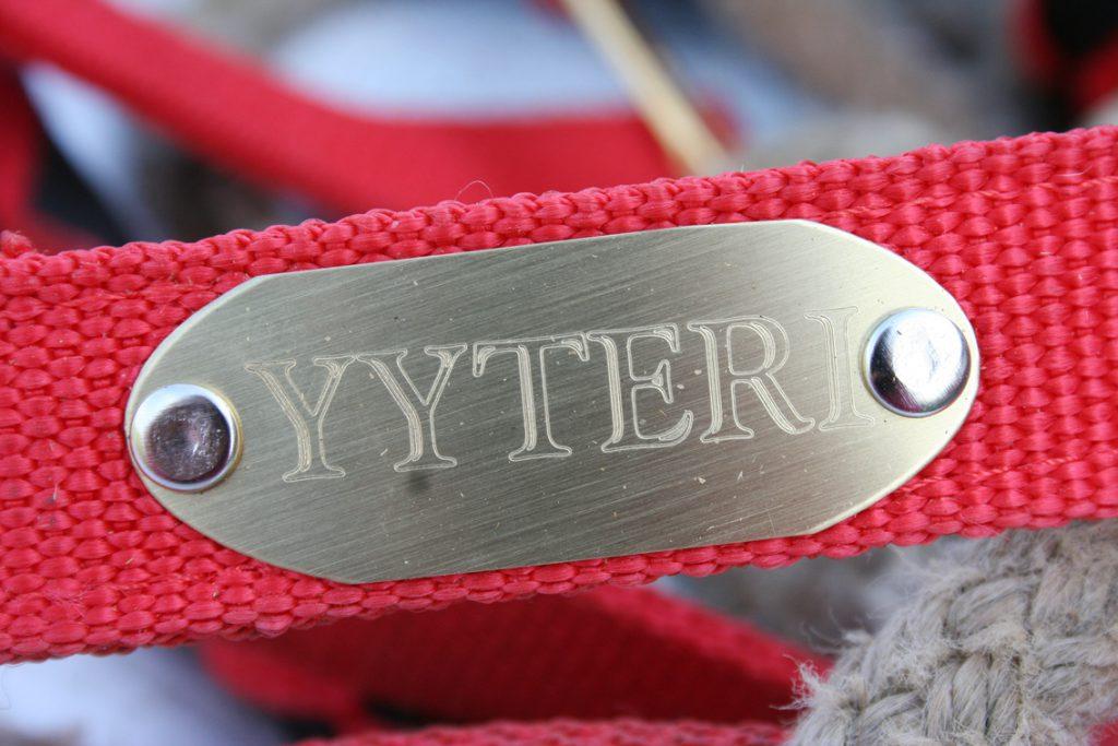 yyteri2_p